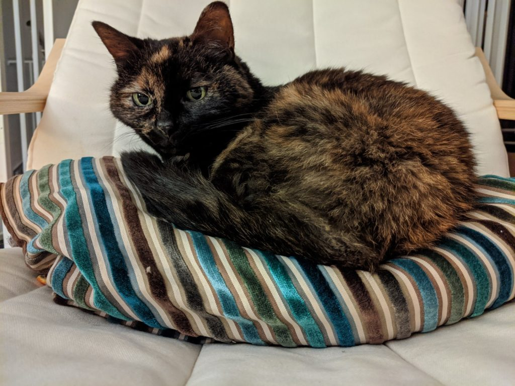 Calico cat on a silky striped pillow